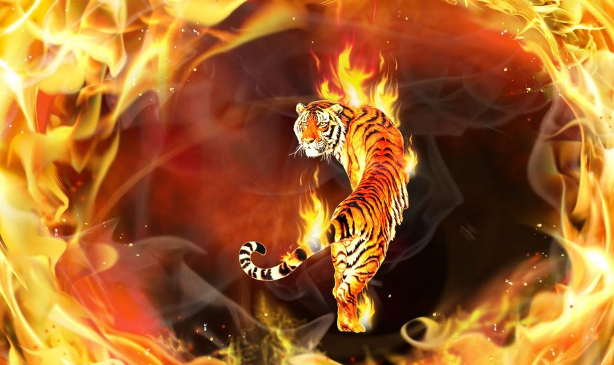 Astrologie chinoise: le Tigre de feu