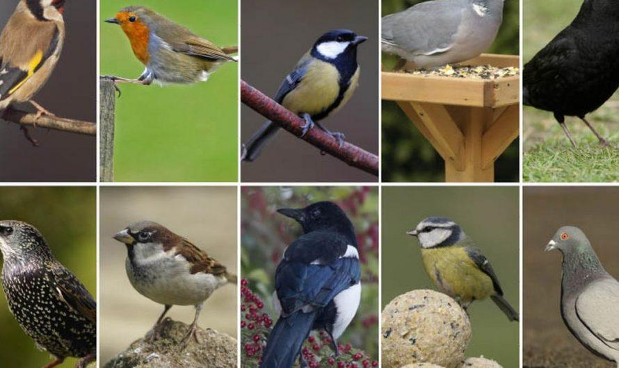 Les oiseaux des jardins.